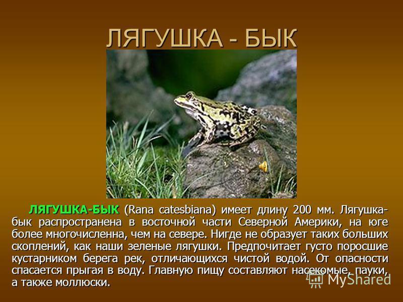ЛЯГУШКА - ГОЛИАФ ЛЯГУШКА-ГОЛИАФ (Rana goliaph) имеющая в длину 250 мм и больше и достигающая веса 3,25 кг самый крупный изо всех, известных лягушек вид. Она имеет очень ограниченное распространение, населяя территорию шириной примерно в 100 км вдоль