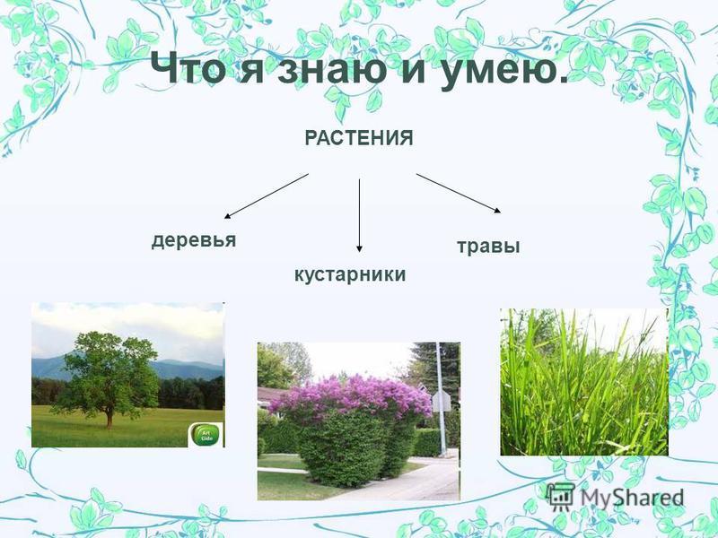 Цель и задачи. Цель: сформировать представление о значении растений в жизни человека. Задачи: 1. узнать как человек использует растения в своей жизни; 2. развивать познавательную активность, умение рассуждать, делать выводы; 3. воспитывать бережное о
