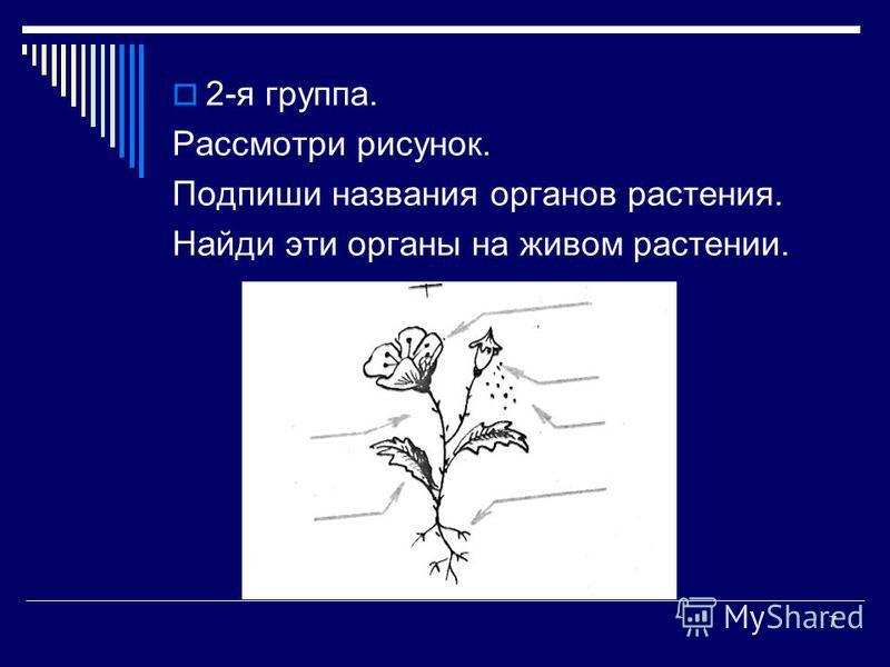 7 2-я группа. Рассмотри рисунок. Подпиши названия органов растения. Найди эти органы на живом растении.