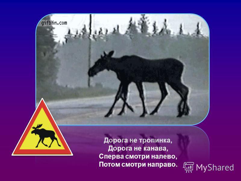 Дорога не тропинка, Дорога не канава, Сперва смотри налево, Потом смотри направо.