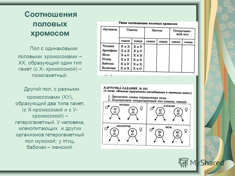 Соотношения половых хромосом Пол с одинаковыми половыми хромосомами – ХХ, образующий один тип гамет (с Х- хромосомой) – гомогаметный. Другой пол, с разными хромосомами (ХУ), образующий два типа гамет, (с Х-хромосомой и с У- хромосомой) – гетерогаметн