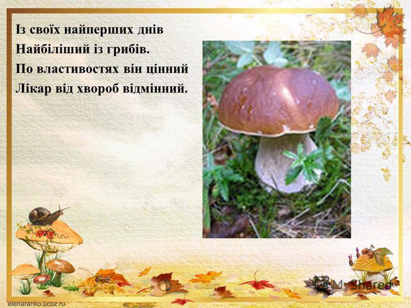 Із своїх найперших днів Найбіліший із грибів. По властивостях він цінний Лікар від хвороб відмінний.