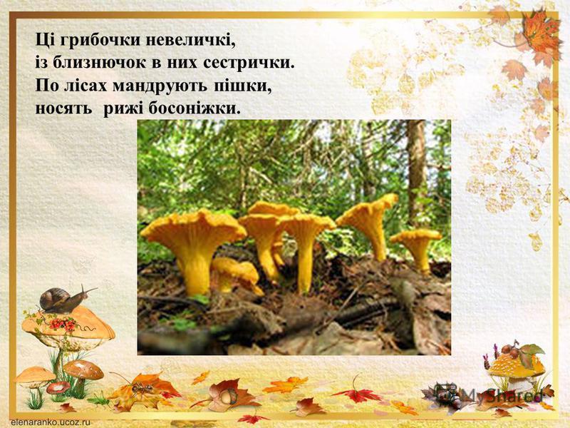 Ці грибочки невеличкі, із близнючок в них сестрички. По лісах мандрують пішки, носять рижі босоніжки.