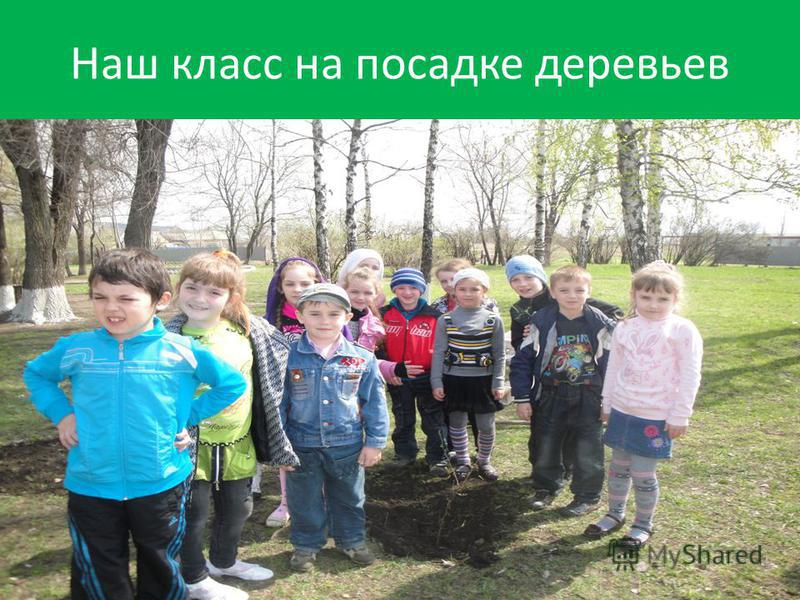 Наш класс на посадке деревьев
