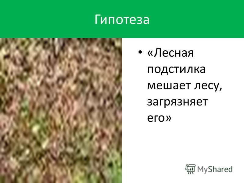 Гипотеза «Лесная подстилка мешает лесу, загрязняет его» «Лесная подстилка мешает лесу, загрязняет его»