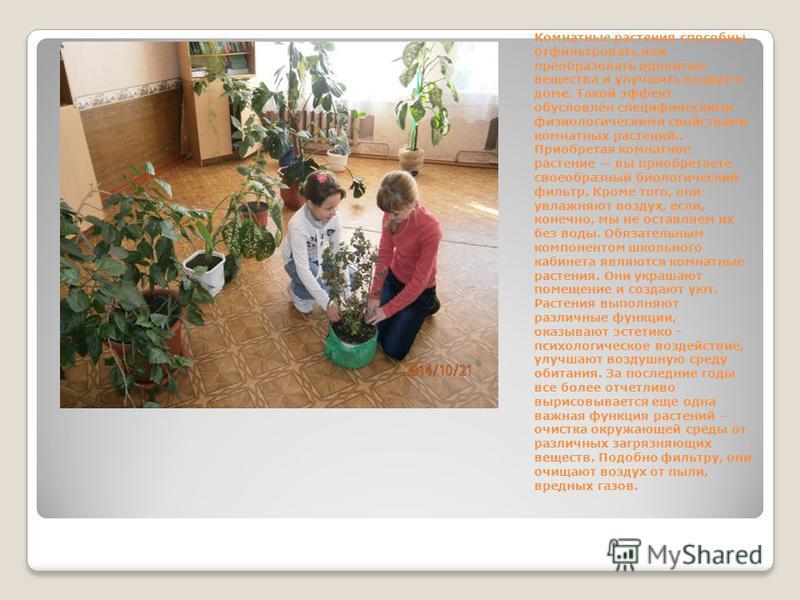 Комнатные растения способны отфильтровать или преобразовать ядовитые вещества и улучшить воздух в доме. Такой эффект обусловлен специфическими физиологическими свойствами комнатных растений.. Приобретая комнатное растение вы приобретаете своеобразный