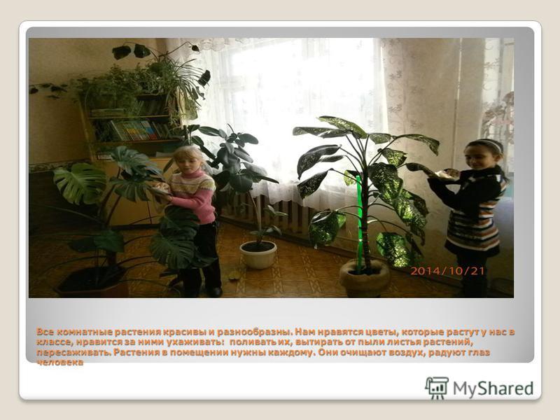 Все комнатные растения красивы и разнообразны. Нам нравятся цветы, которые растут у нас в классе, нравится за ними ухаживать: поливать их, вытирать от пыли листья растений, пересаживать. Растения в помещении нужны каждому. Они очищают воздух, радуют