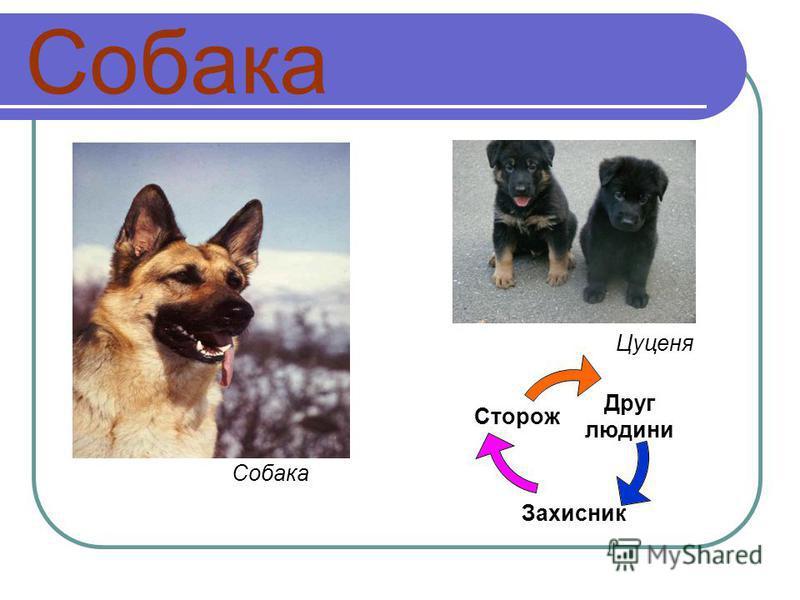 Собака Друг людини Захисник Сторож Собака Цуценя