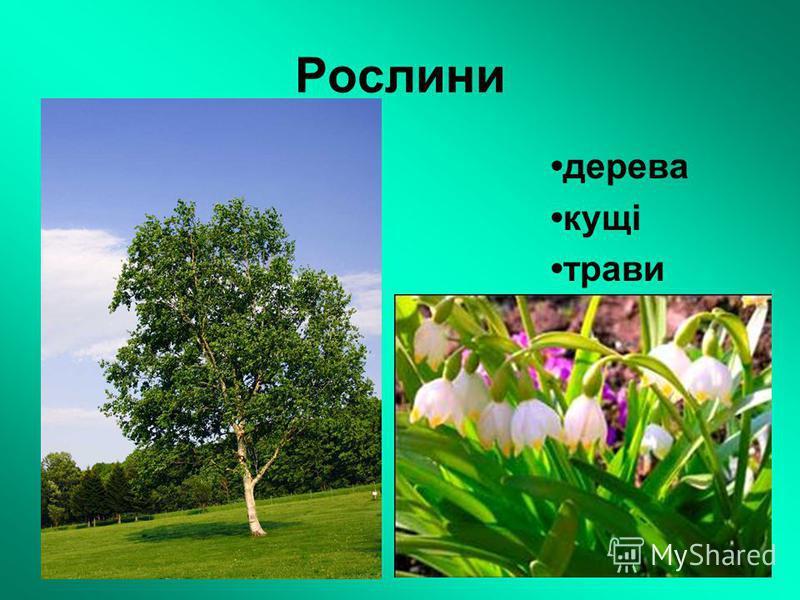 Рослини дерева кущі трави
