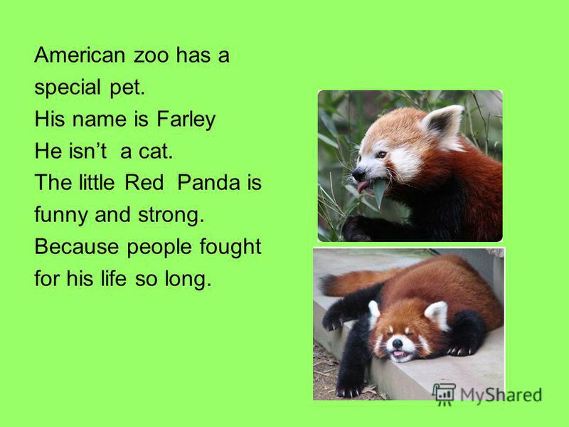 American zoo has a special pet. His name is Farley He isnt a cat. The little Red Panda is funny and strong. Because people fought for his life so long.