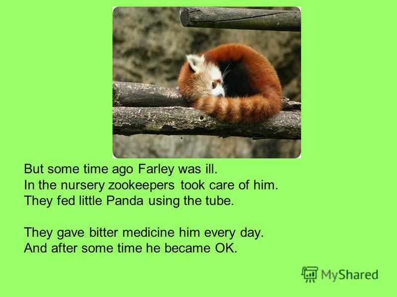 But some time ago Farley was ill. In the nursery zookeepers took care of him. They fed little Panda using the tube. They gave bitter medicine him every day. And after some time he became OK.