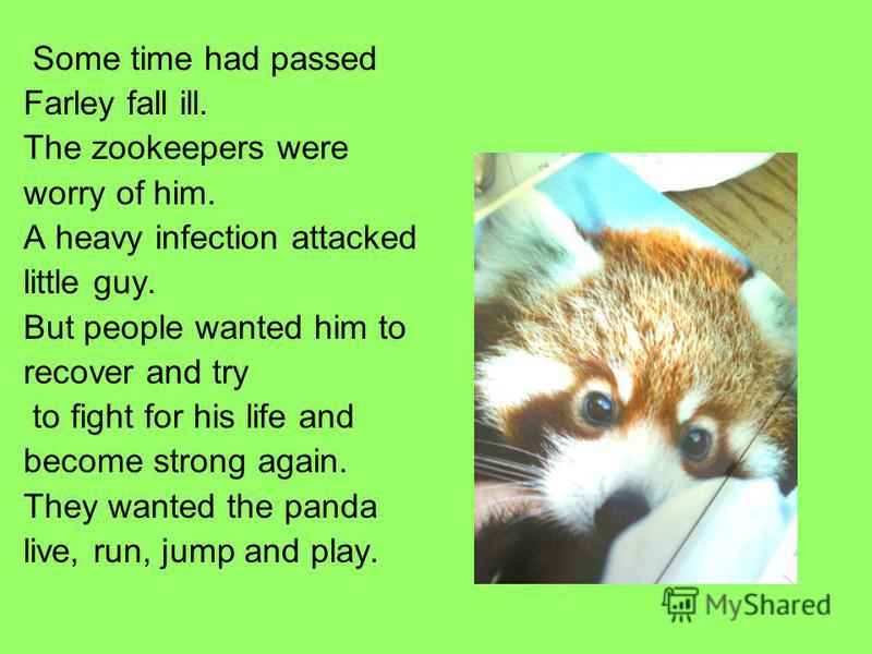 Some time had passed Farley fall ill. The zookeepers were worry of him. A heavy infection attacked little guy. But people wanted him to recover and try to fight for his life and become strong again. They wanted the panda live, run, jump and play.