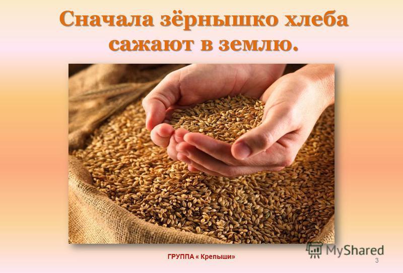Сначала зёрнышко хлеба сажают в землю. ГРУППА « Крепыши» 3