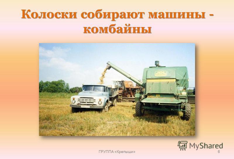 Колоски собирают машины - комбайны ГРУППА «Крепыши» 6