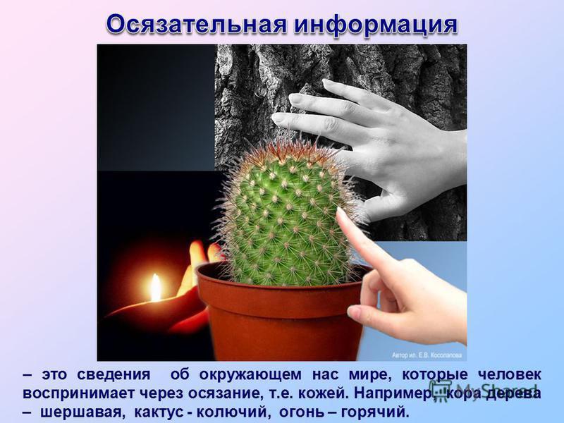 – это сведения об окружающем нас мире, которые человек воспринимает через осязание, т.е. кожей. Например, кора дерева – шершавая, кактус - колючий, огонь – горячий.