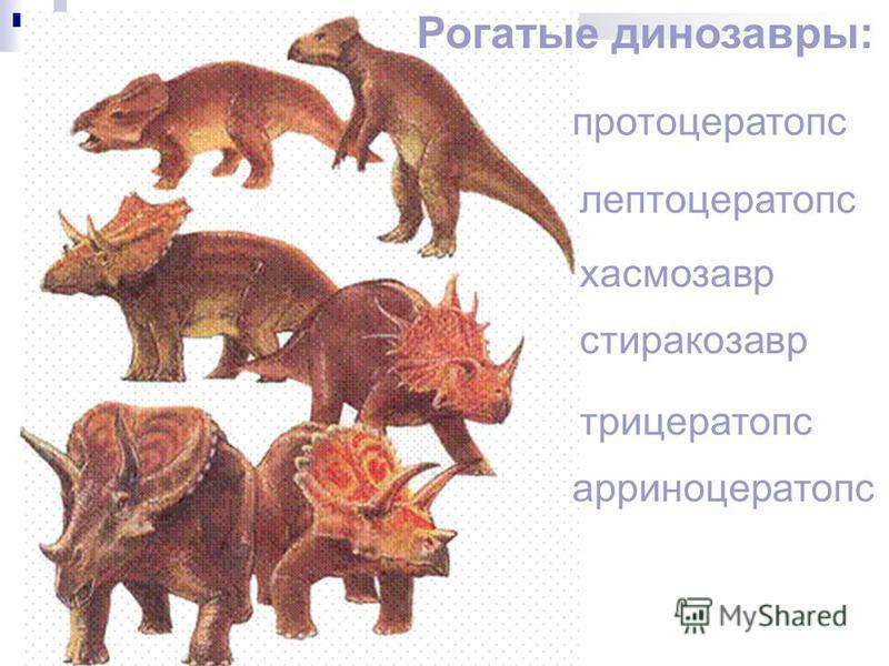 Рогатые динозавры: протоцератопс лептоцератопс хасмозавр стиракозавр трицератопс арриноцератопс
