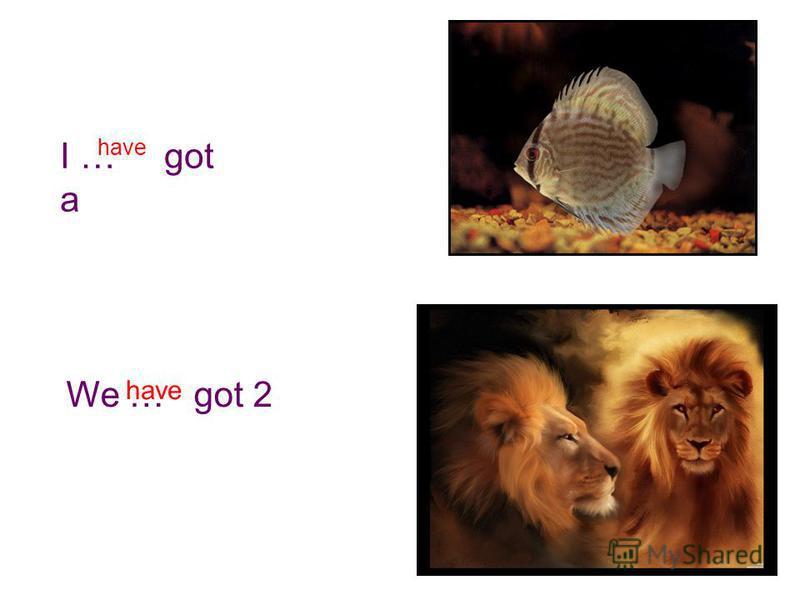 I … got a have We … got 2 have