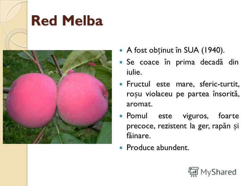 Red Melba A fost obinut în SUA (1940). Se coace în prima decad ă din iulie. Fructul este mare, sferic-turtit, rou violaceu pe partea însorit ă, aromat. Pomul este viguros, foarte precoce, rezistent la ger, rap ă n i f ă inare. Produce abundent.