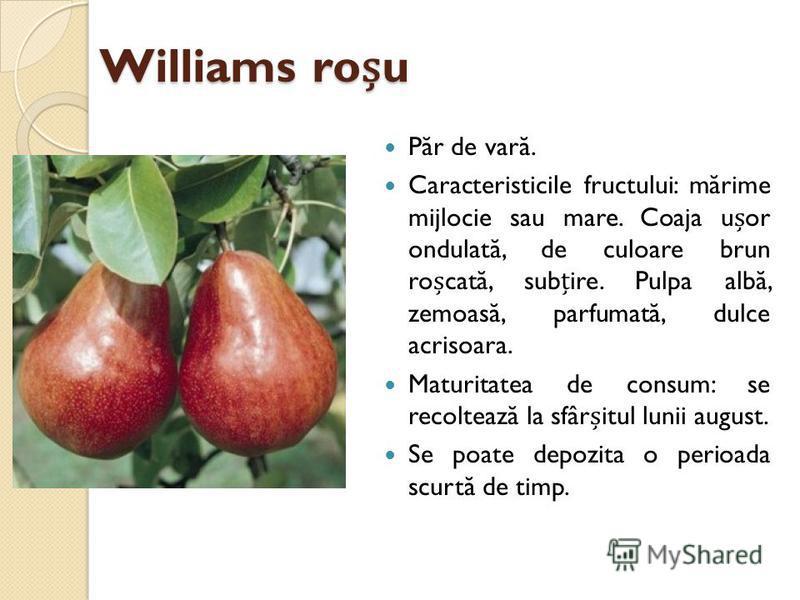 Williams rou P ă r de var ă. Caracteristicile fructului: m ă rime mijlocie sau mare. Coaja uor ondulat ă, de culoare brun rocat ă, subire. Pulpa alb ă, zemoas ă, parfumat ă, dulce acrisoara. Maturitatea de consum: se recolteaz ă la sfâritul lunii aug