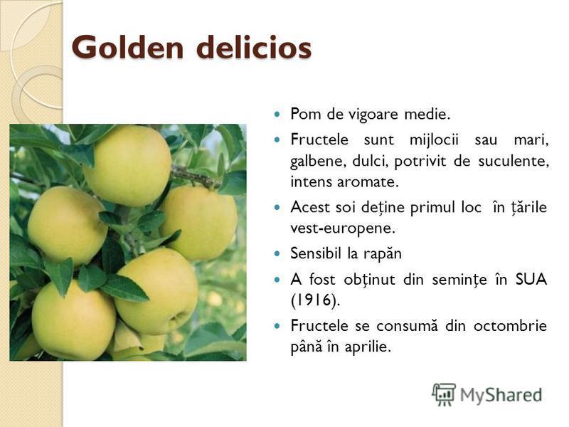 Golden delicios Pom de vigoare medie. Fructele sunt mijlocii sau mari, galbene, dulci, potrivit de suculente, intens aromate. Acest soi deine primul loc în ă rile vest-europene. Sensibil la rap ă n A fost obinut din semine în SUA (1916). Fructele se