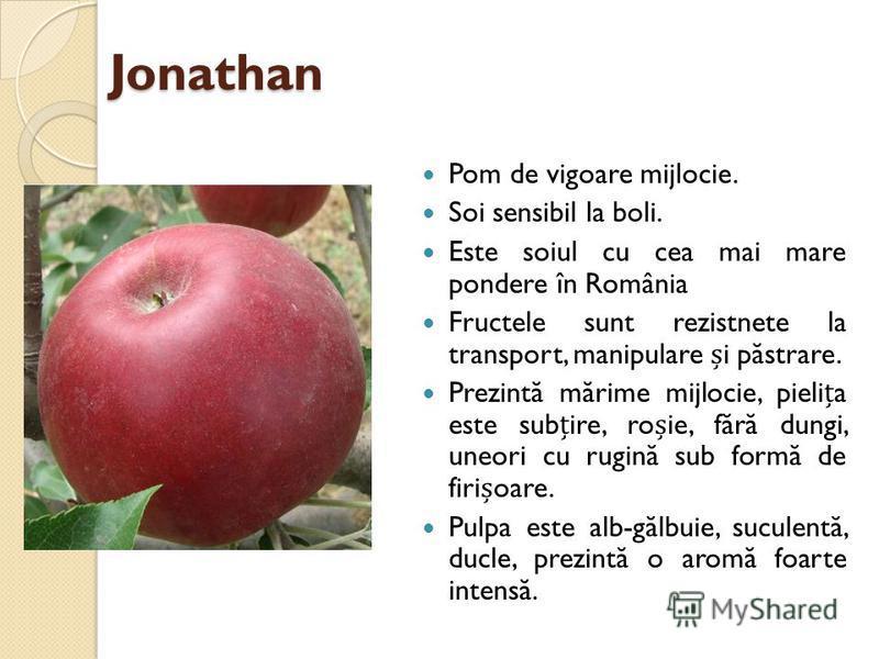 Jonathan Pom de vigoare mijlocie. Soi sensibil la boli. Este soiul cu cea mai mare pondere în România Fructele sunt rezistnete la transport, manipulare i p ă strare. Prezint ă m ă rime mijlocie, pielia este subire, roie, f ă r ă dungi, uneori cu rugi