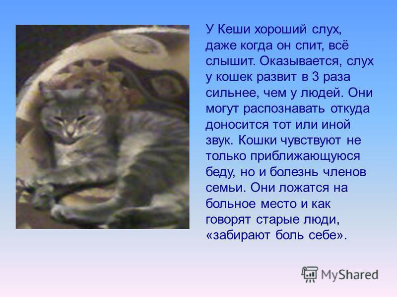 У Кеши хороший слух, даже когда он спит, всё слышит. Оказывается, слух у кошек развит в 3 раза сильнее, чем у людей. Они могут распознавать откуда доносится тот или иной звук. Кошки чувствуют не только приближающуюся беду, но и болезнь членов семьи.