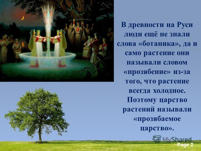 Powerpoint Templates Page 2 В древности на Руси люди ещё не знали слова «ботаника», да и само растение они называли словом «прозябание» из-за того, что растение всегда холодное. Поэтому царство растений называли «прозябаемое царство».