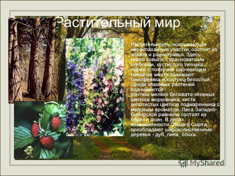 Растительный мир Растительность, покрывающая нераспаханные участки, состоит из злаков и разнотравья. Здесь много ковыля с красноватыми стеблями, кустистого типчака, пырея с ползучим корневищем. Немалое место занимают тимофеевка и кострец безостый. Ср