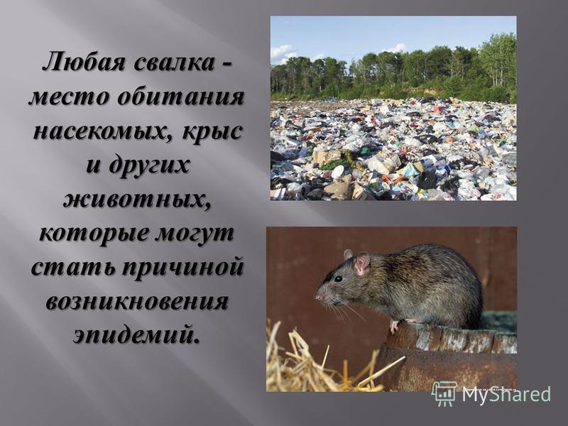 Любая свалка - место обитания насекомых, крыс и других животных, которые могут стать причиной возникновения эпидемий.