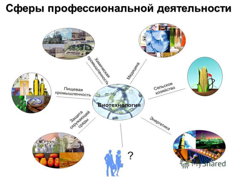 Сферы профессиональной деятельности