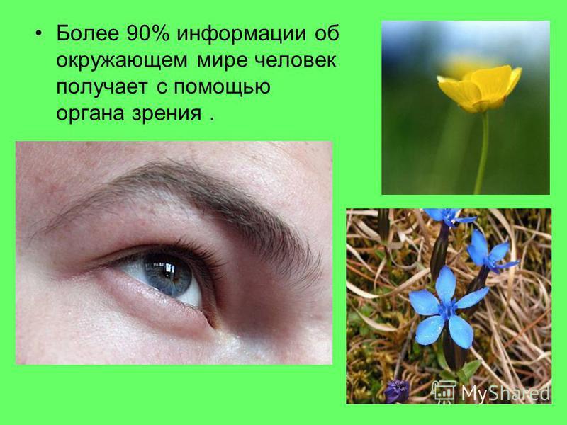 Более 90% информации об окружающем мире человек получает с помощью органа зрения.