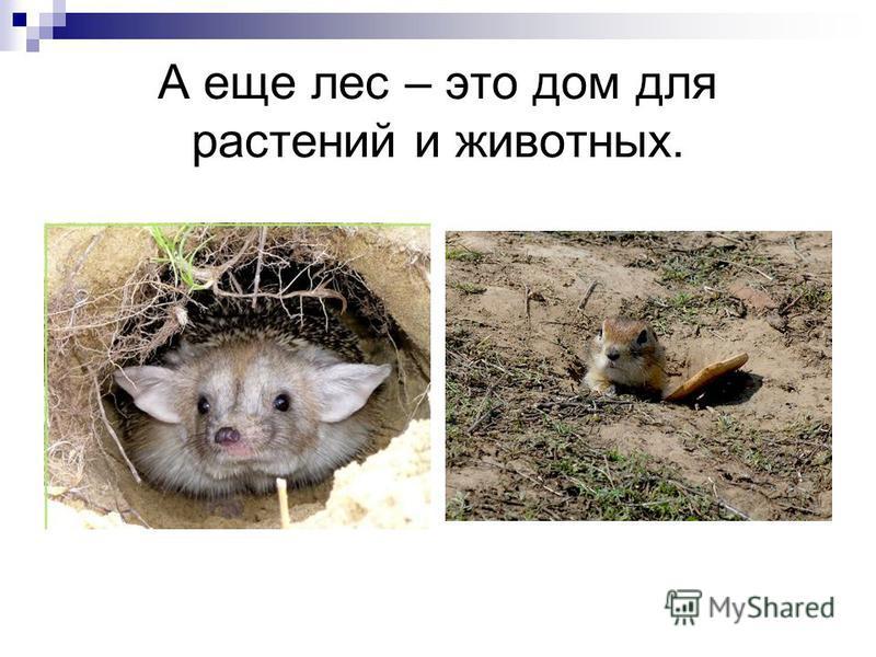 А еще лес – это дом для растений и животных.
