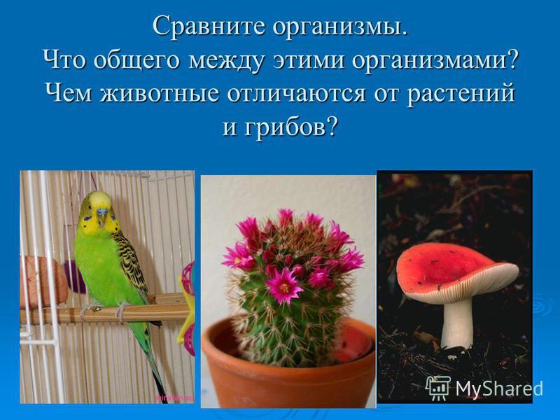Сравните организмы. Что общего между этими организмами? Чем животные отличаются от растений и грибов?