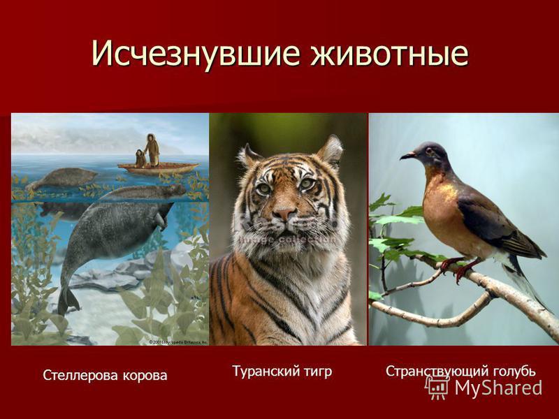 Исчезнувшие животные Стеллерова корова Туранский тигр Странствующий голубь