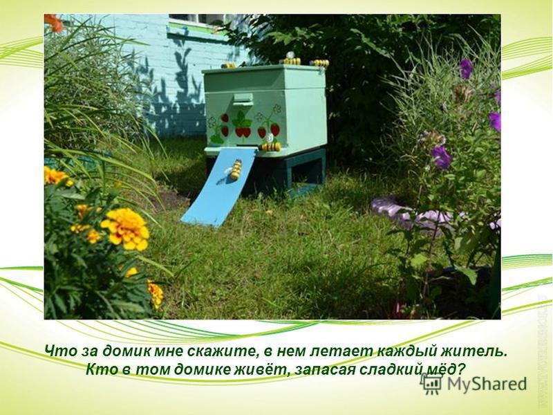 Что за домик мне скажите, в нем летает каждый житель. Кто в том домике живёт, запасая сладкий мёд?