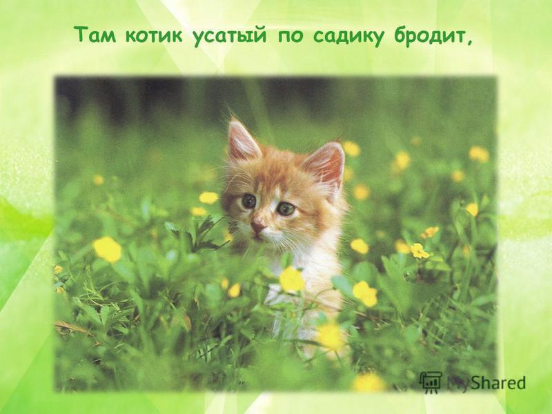 Там котик усатый по садику бродит,