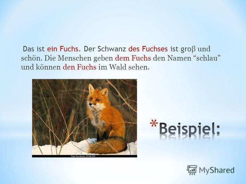 Das ist ein Fuchs. Der Schwanz des Fuchses ist gro β und schön. Die Menschen geben dem Fuchs den Namen schlau und können den Fuchs im Wald sehen.