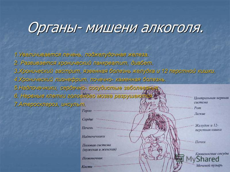 Органы- мишени алкоголя. 1. Увеличивается печень, поджелудочная железа. 2. Развивается хронический панкреатит, диабет. 3. Хронический гастрит, язвенная болезнь желудка и 12 перстной кишки. 4. Хронический пиелонефрит, почечнокаменная болезнь. 5.Надпоч