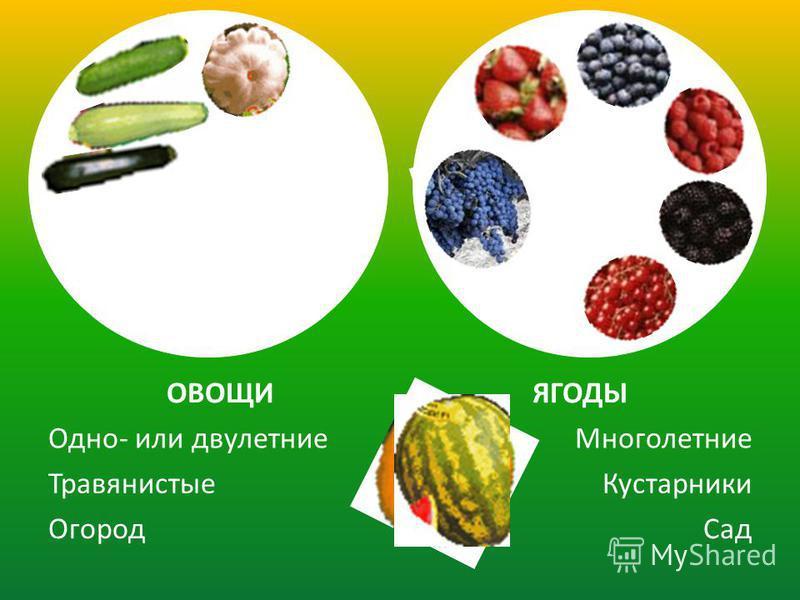 Сад Огород Кустарники Травянистые Многолетние Одно- или двулетние ЯГОДЫОВОЩИ