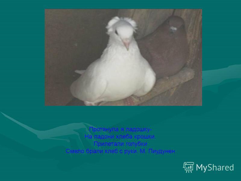 Протянула я ладошку- На ладони хлеба крошки. Прилетали голубки Смело брали хлеб с руки. М. Пиудунен