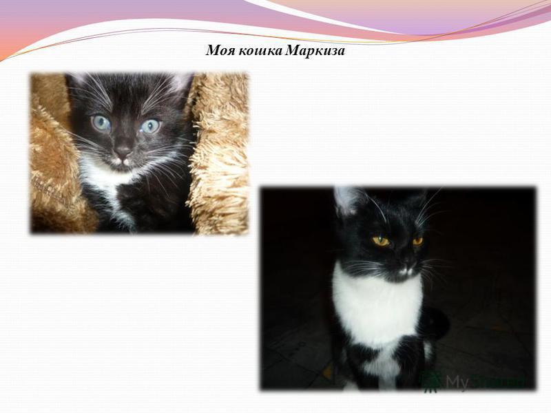 Моя кошка Маркиза