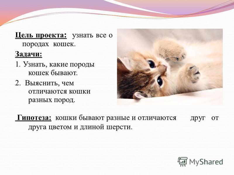 Цель проекта : узнать все о породах кошек. Задачи: 1. Узнать, какие породы кошек бывают. 2. Выяснить, чем отличаются кошки разных пород. Гипотеза: кошки бывают разные и отличаются друг от друга цветом и длиной шерсти.