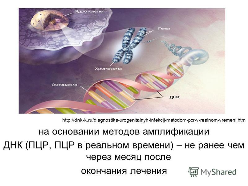 http://dnk-k.ru/diagnostika-urogenitalnyh-infekcij-metodom-pcr-v-realnom-vremeni.htm на основании методов амплификации ДНК (ПЦР, ПЦР в реальном времени) – не ранее чем через месяц после окончания лечения