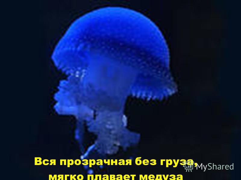 Вся прозрачная без груза, мягко плавает медуза