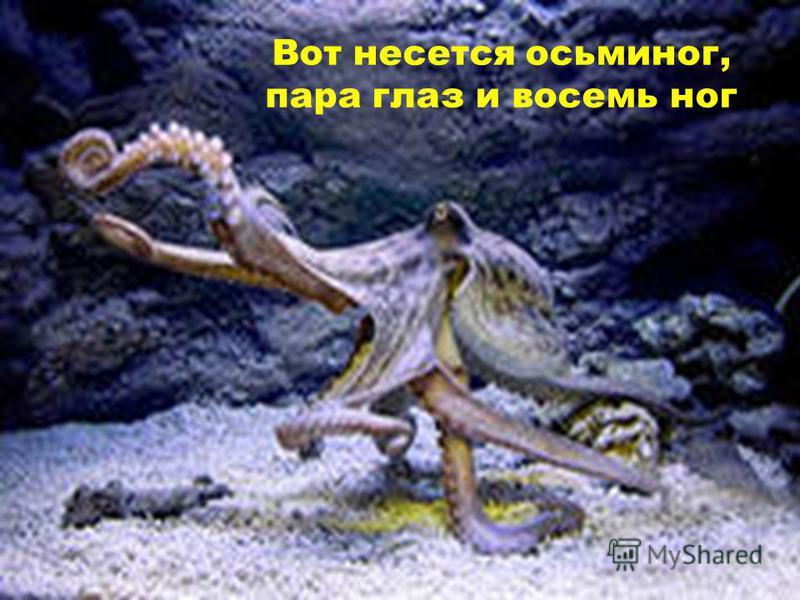 Вот несется осьминог, пара глаз и восемь ног