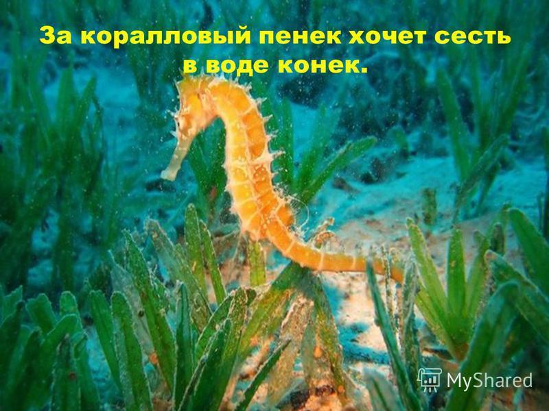 За коралловый пенек хочет сесть в воде конек.