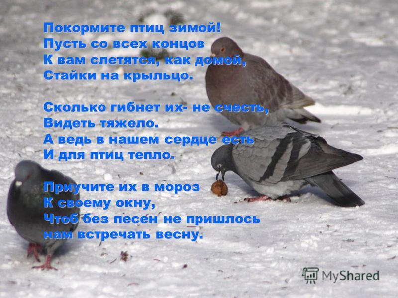 Покормите птиц зимой! Пусть со всех концов К вам слетятся, как домой, Стайки на крыльцо. Сколько гибнет их- не счесть, Видеть тяжело. А ведь в нашем сердце есть И для птиц тепло. Приучите их в мороз К своему окну, Чтоб без песен не пришлось нам встре