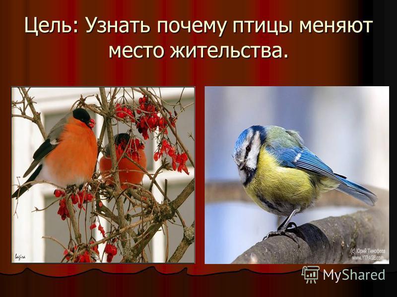 Цель: Узнать почему птицы меняют место жительства.