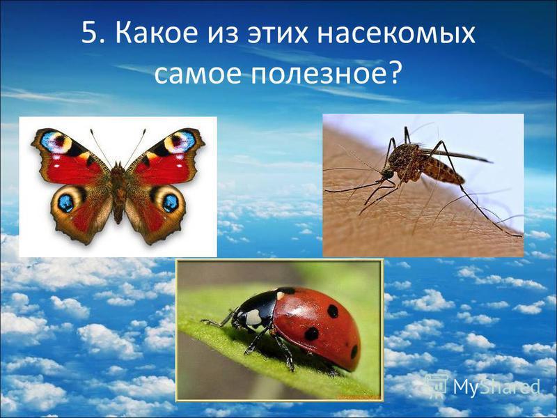 5. Какое из этих насекомых самое полезное?