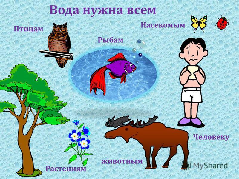 Вода нужна всем Растениям Рыбам Насекомым Птицам животным Человеку